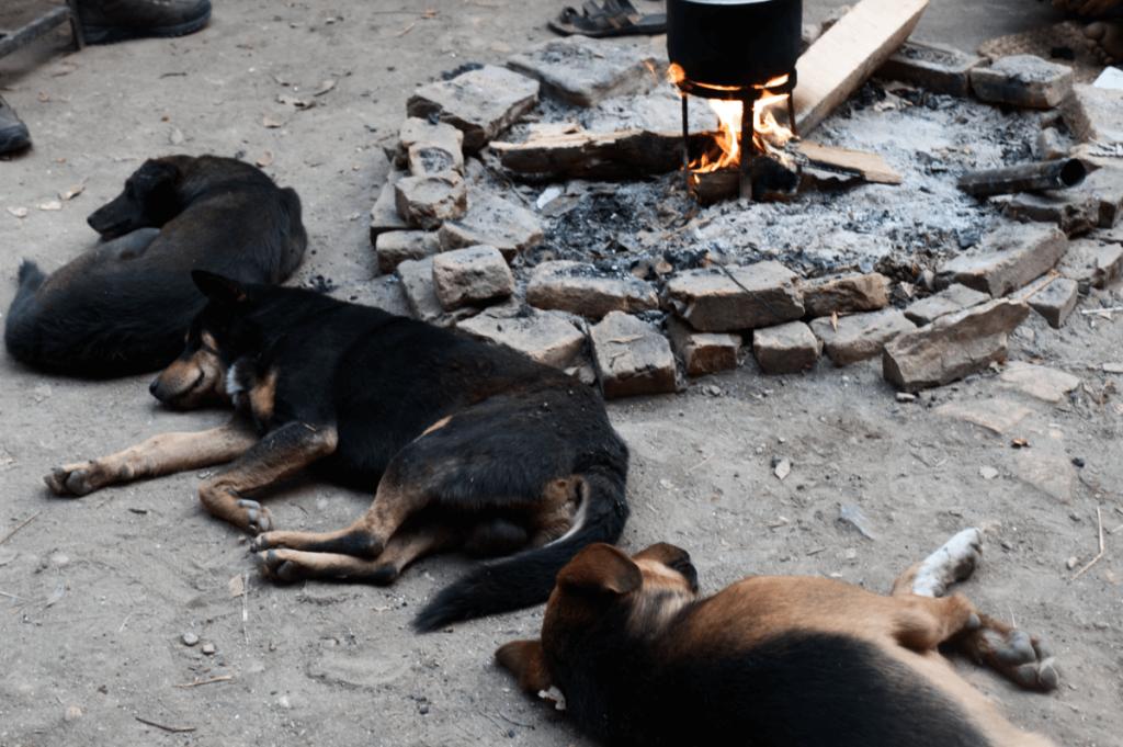 nepal_travelogue_animals1_maugodudek
